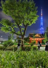IMG_7104 (kbaranowski) Tags: japan japaneseculture tokyotower krzysztofbaranowski 2016krzysztofbaranowski tree touristattraction touristdestination illuminated nippon nihon night