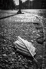 Sidewalk Metaphor (rowjimmy76) Tags: leaf nature sidewalk portland pdx outdoors lonely street bw black white landscape iphone6 cameraphone pnw pacificnorthwest oregon