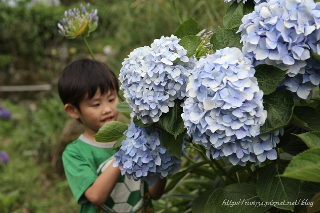 20110612_YangMingMtFlowe_0242 f