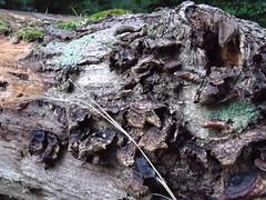 lichen by Teckelcar