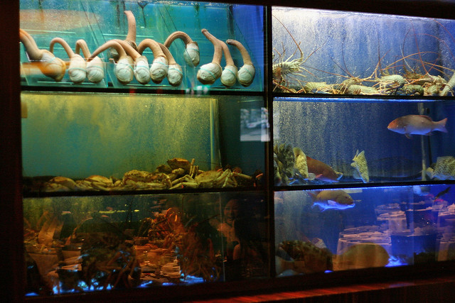 Live seafood tanks at Feng Shui Inn