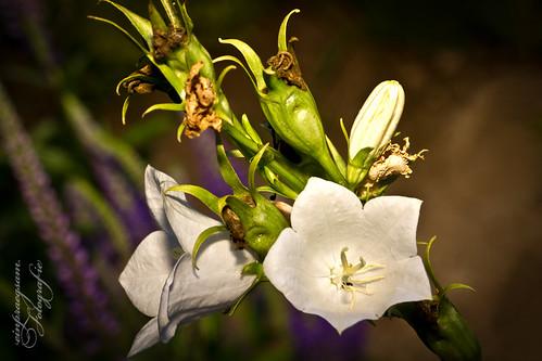 Flowerpower: Leuchten in der Nacht