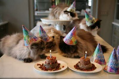 cat_birthday_parties_01