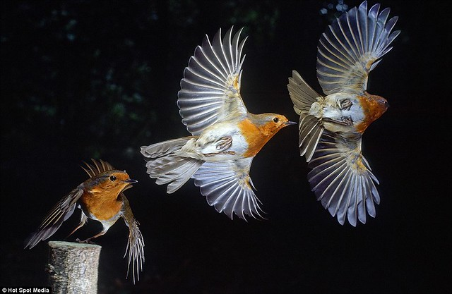 Amazing photos capture split-second movements of animals leaping and flying... in a single frame  4