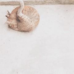 จะเล่นท่ายากขนาดนี้| บอกกันหน่อยนะ| โยคะ ค่ะ| มีแมวเป็นครูสอน| แมวบ้านใครมาจับไปที| แวะมาเล่นกันอีกนะ #cat #เจ้าเสือน้อย