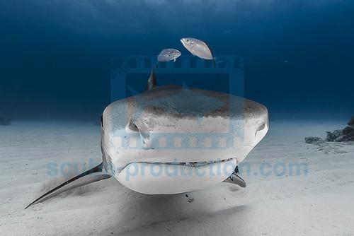2014 03 TIGER BEACH-2763