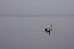 May Fog-13.jpg (elektratig) Tags: fog newjersey stillwater sussexcounty swartswood lakeswartswood