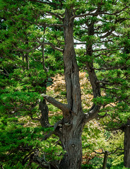 Branching Out (campra) Tags: japan aomori  hirosaki  fujita garden  park green tree branch