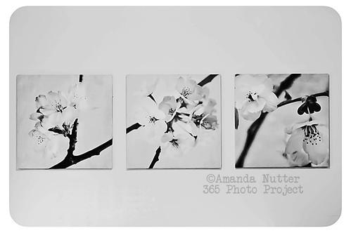 365-152_ALN_0694 by amaranthris