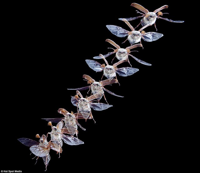 Amazing photos capture split-second movements of animals leaping and flying... in a single frame  1