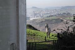 (Pablev) Tags: horse canon caballo tamron 500d