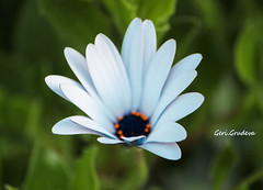 IMG_0082 (Geri Grudeva) Tags: camera flowers blue trees plants cloud cats brown sun