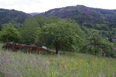 _IGP5519 (daanca) Tags: unsergarten vivitar2448 laufenbachrundweg
