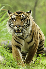 Jacksonville Zoo and Gardens 6-1-14 (RobBixbyPhotography) Tags: jacksonvillezooanimals flickrbigcats