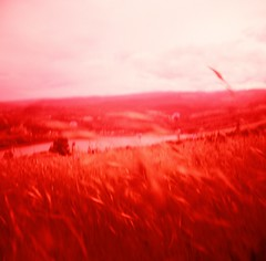 Meadow Whispers II (liquidnight) Tags: red film nature grass analog mediumformat river landscape outdoors washington blurry lomo xpro lomography crossprocessed whisper fuji wind hiking toycamera meadow surreal velvia dreamy analogue pnw rvp100f dreamscape red pouva gorge coyote pacific wall shift columbia northwest labyrinth start pouva