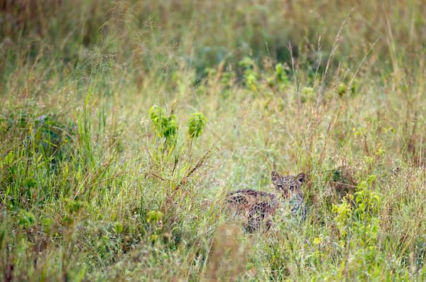RYALE_Rwanda_Uganda_Safari-301