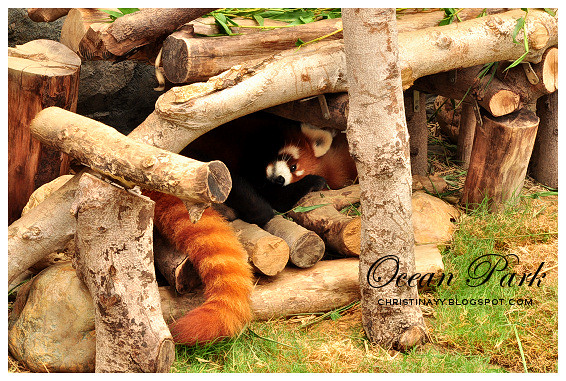 Hong Kong Trip Day 3: Ocean Park (海洋公园) Giant Pandas