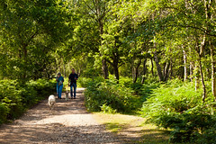 A couple exercise their dogs in the New Forest near Highwood in Hampshire (Anguskirk) Tags: uk trees england dog track path eu hampshire bracken footpath walkers newforest rockford highwood