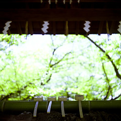 light at the temple in Japan (mosbies) Tags: color film japan mediumformat square temple fuji realaace flexaret selfdeveloping