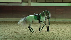 "Lipizzaner Dressage <a style=""margin-left:10px; font-size:0.8em;"" href=""http://www.flickr.com/photos/64637277@N07/5890340339/"" target=""_blank"">@flickr</a>"