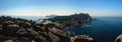 Primera visita... (bmanteiga) Tags: beach stone island seagull galicia isla gaviota vigo piedra ces