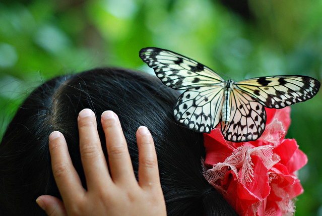 flutter_0672