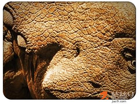 Triceratops-1
