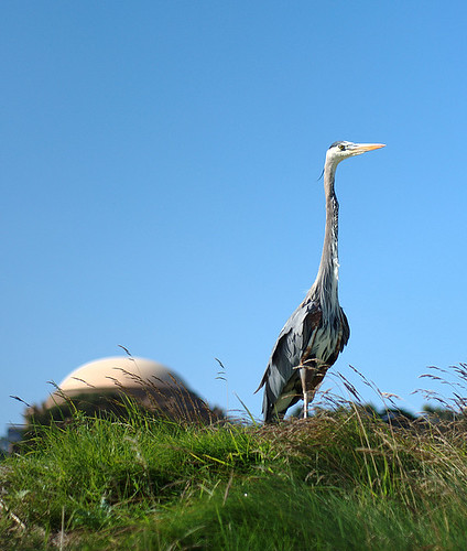 Presidio Park Bird