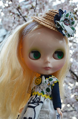 Cold day and cherry blossoms 11
