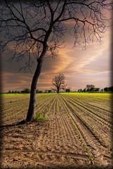 L'albero (celestino2011) Tags: verde alberi tramonto nuvole ombre campo sera nikond60
