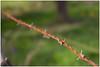 Le piquant de la vie (erauqs360) Tags: nature canon perspective 1750 tamron vc phototech 60d sarrebourg 18h18 canoneos60d tamron1750f28vc hostjeanfrancois