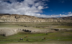 High Pastures (Matteo Allegro) Tags: travel nepal sky horses mountains green clouds landscape high lo fields pastures mustang himalaya grazing nationalgeographic himal manthangupper