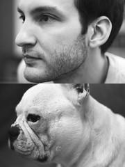 Amores (María Granados) Tags: dog cute blancoynegro 50mm adorable perro frenchie frenchbulldog grayscale f18 negroyblanco bulldogfrances