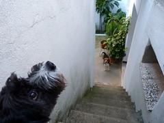 Kiddi y Tristn (Loneire) Tags: dog beagle dogs panasonic perro perros dmcfz45