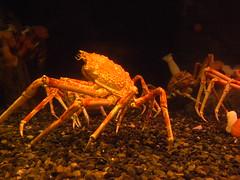 Aquarium Atlanta (5) (bwms60) Tags: october09