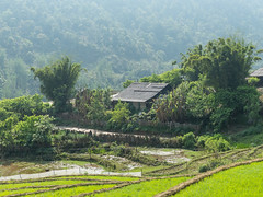 Sin Chai Valley (Serendigity) Tags: countryside scenery seasia vietnam sapa