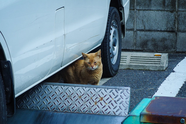 Today's Cat@2014-05-19