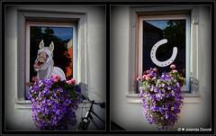 Hbsche Fensterdeko (Jolanda Donn) Tags: collage fenster fensterscheiben fenstermalerei glasmalerei kunst pferd weissespferd hufeisen blumen blten pflanzen topfpflanzen konstanz deutschland september september2016 15092016 nikoncoolpixp900