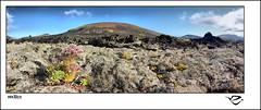 :: La Conquista de la Vida :: (:: Riky ::) Tags: panorama lava flor lanzarote canarias vida rocas liquen volcan timanfaya riky bejeque wwwrikyes gungaro
