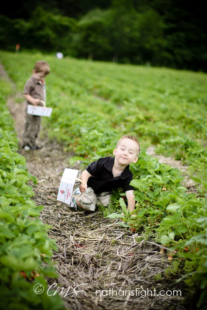 strawberry picking 2011 -_-3