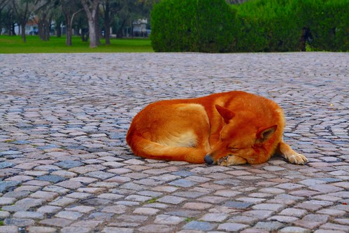 Perro callejero en San Lorenzo
