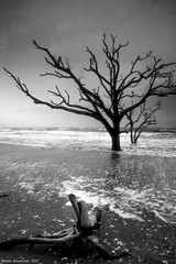 Trees in Surf, #6 (steveyaphotos) Tags: ocean sea bw usa seascape tree beach nature landscape island surf waves scenic southcarolina monotone driftwood shore botanybay seashore atlanticocean edistoisland snad stevenainsworth