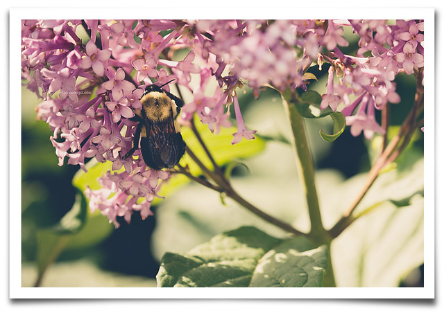 Mizz Bee