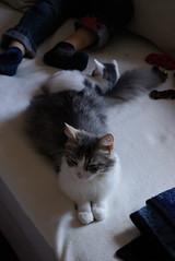 IMGP9790 (frankbehrens) Tags: cats cat chats kitten chat gatos gato katze katzen