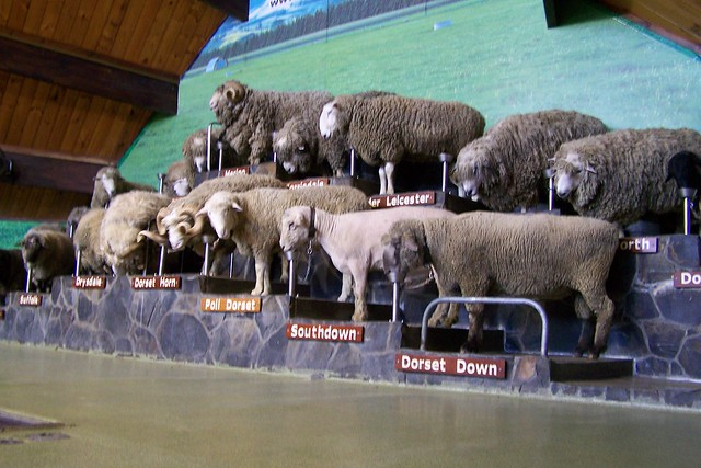 Agrodome Sheep Farm