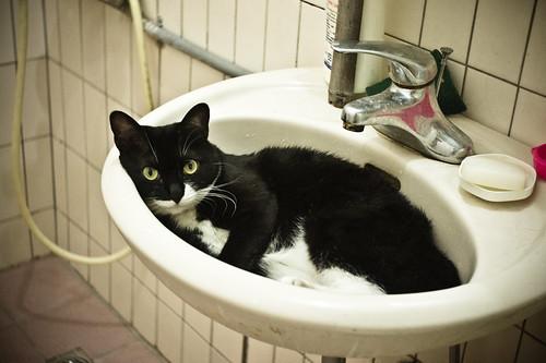 [フリー画像] 動物, 哺乳類, 猫・ネコ, 201106290500