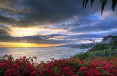 Ocean View (- Eddie -) Tags: ocean california flowers sunset sky cliff sun house beach water clouds waves palmtrees bouganvillea oceanview lagunabeach bouganvilla treasureislandbeach doublyniceshot tripleniceshot mygearandmeplatinum mygearandmediamond artistoftheyearlevel3 artistoftheyearlevel4 aboveandbeyondlevel1 artistoftheyearlevel5 4timesasnice artistoftheyearlevel7 artistoftheyearlevel6 aboveandbeyondlevel2