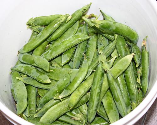 First Garden fresh Peas!