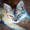 Miaaaaau (Juan Antonio Capó) Tags: gato cat minino felino animal feline mace katze кошка котка kočka 猫 잭 kissa chat γάτα kat kucing köttur gatto kot pisică мачка แมว kedi кішка קאַץ חתול վալետ قط gat moix 고양이 mačka िल्ली pusa mèo گربه