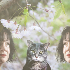 It's all about the cat (The Shutterbug Eye) Tags: pink portrait woman pet selfportrait green cat photomanipulation photoshop self cherry spring blossoms gray twin cherryblossom petportrait petphotography